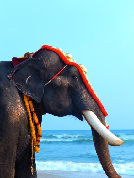 beach elephant ocean surf